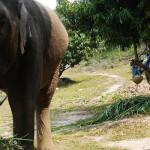 Thailand Academy : ça trompe énormément