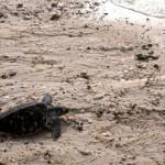 #ThailandBFF : Koh Talu, Paradis écologique (2)